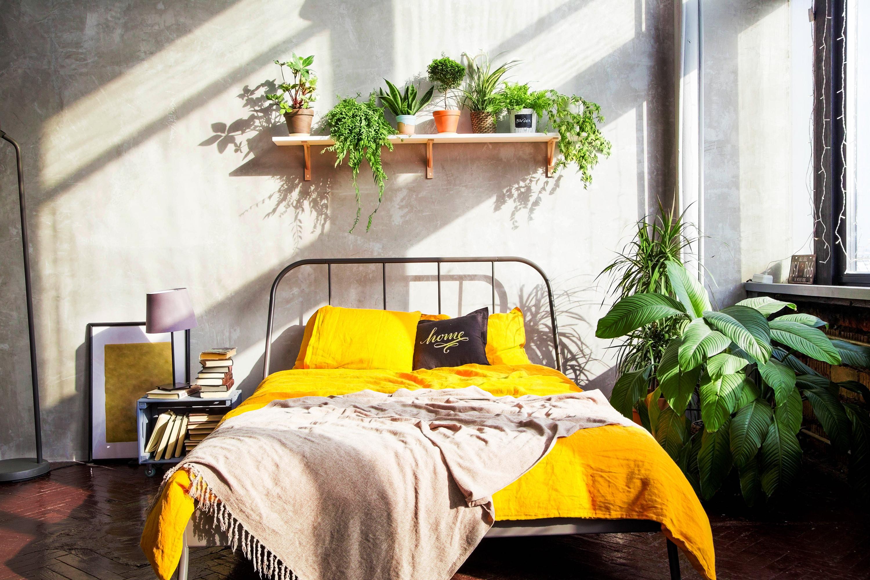 Plantes dans la chambre à coucher avec schéma jaune
