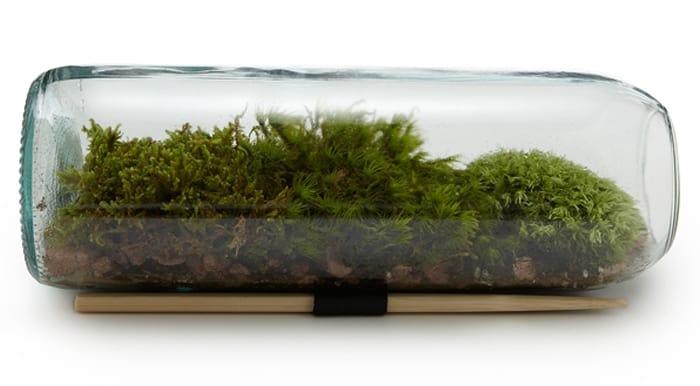 Bouteille de vin terrarium