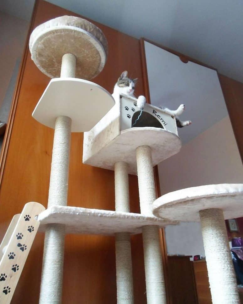 Grand arbre à chat avec une maison pour chat