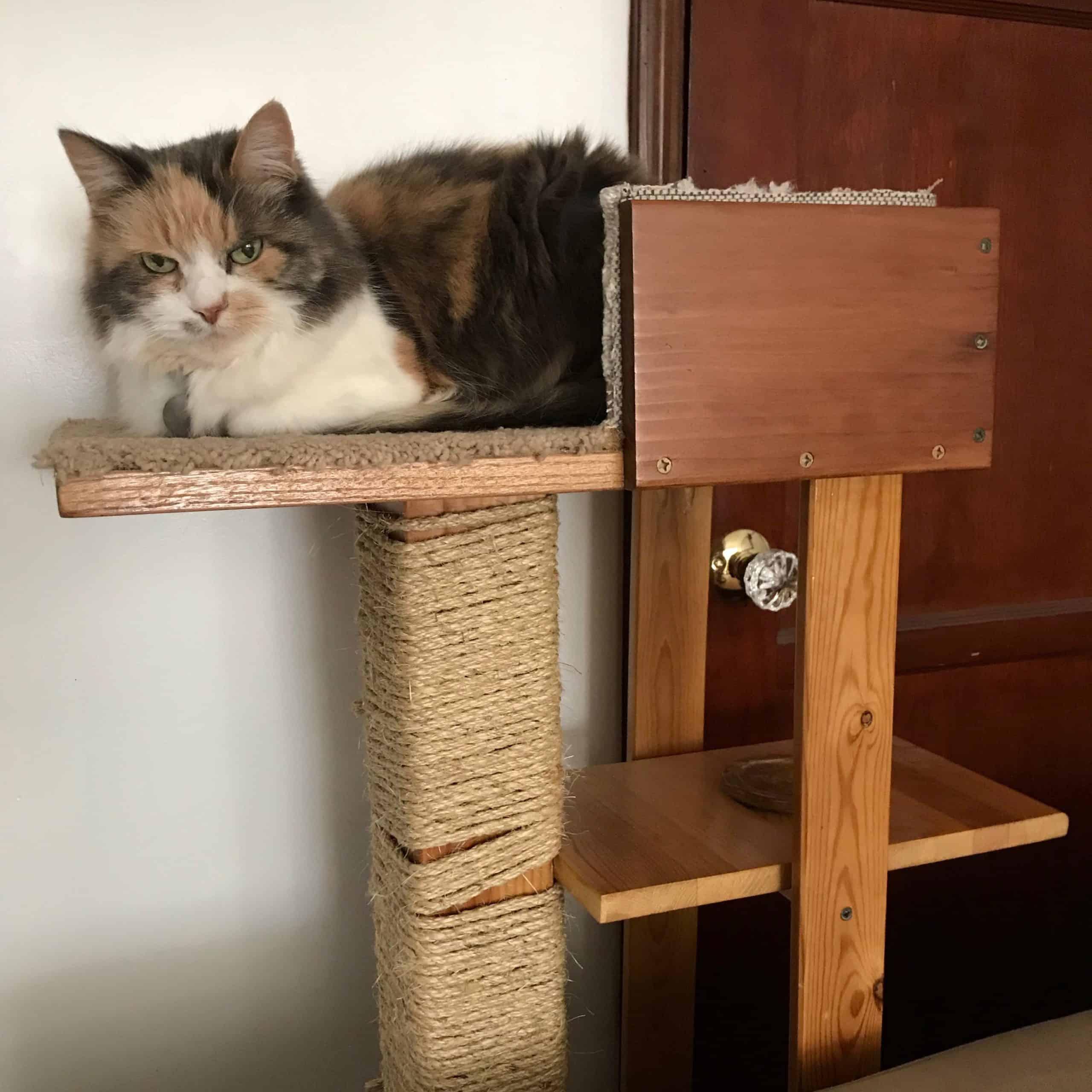 Arbre à chat bricolage avec une étagère à eau