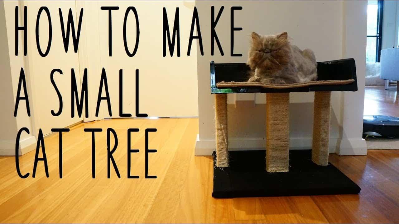 Petit arbre à chat bas