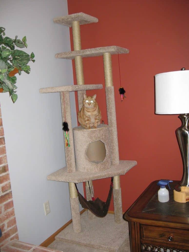Arbre à chat couvert de tapis avec un hamac