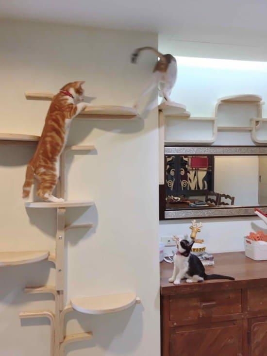 Tabouret de chat taillé et mural