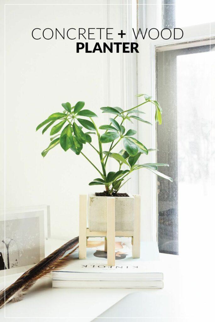 Support pour plantes en béton et bois