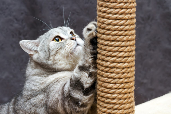 Meilleur grattoir pour chat de la journée internationale de l'artisanat