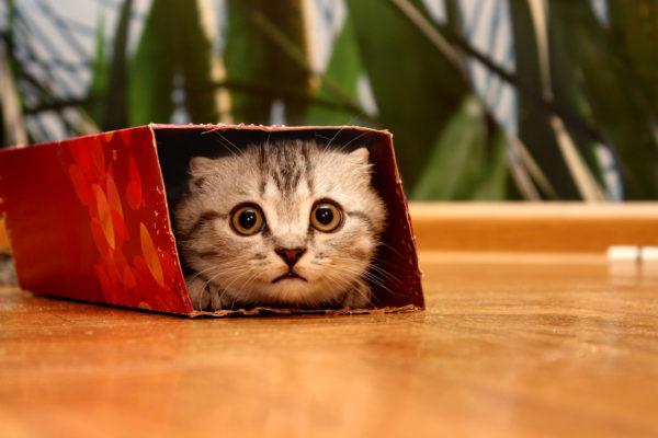 Meilleure boîte pour chat de la journée internationale