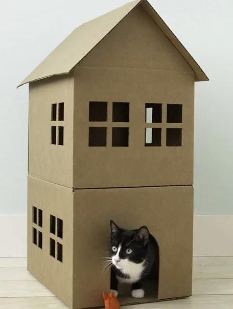 Boîte en carton pour chat de la meilleure journée internationale de l'artisanat