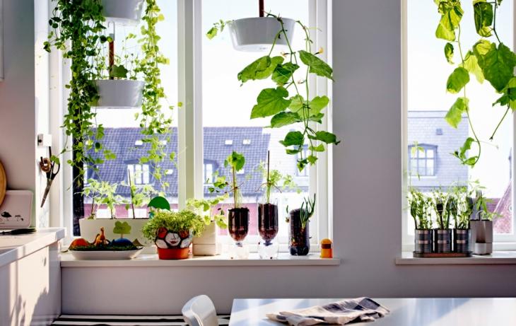 plantes de rebord de fenêtre jardins intérieurs