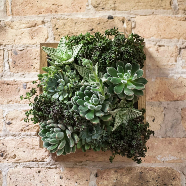 joli mur de plantes d'image