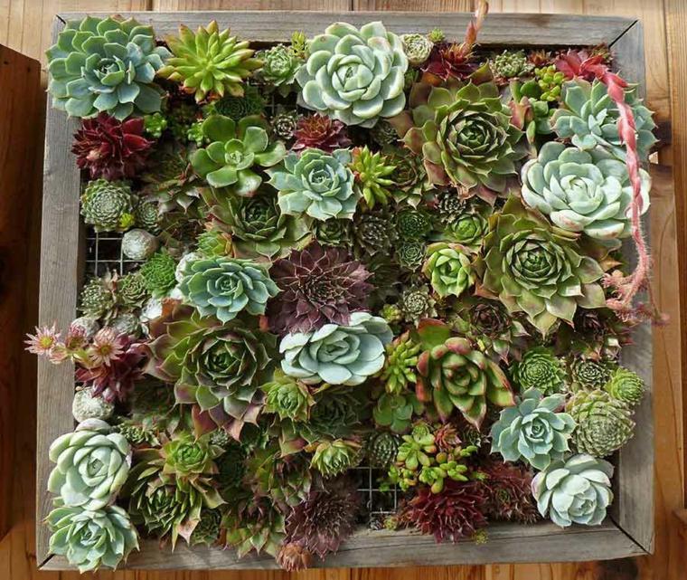panneau décoré de plantes succulentes