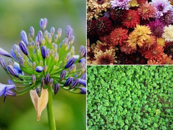 10 plantes d'extérieur résistantes au soleil et à la chaleur