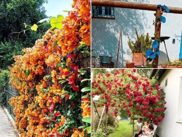 20 photos avec des vignes et des plantes grimpantes pour les porches et les terrasses