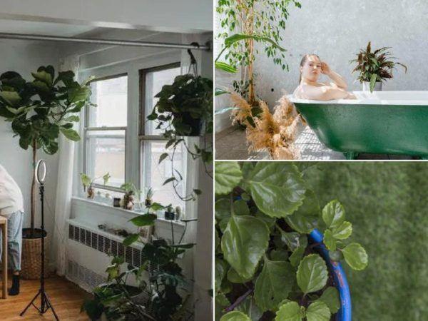 Les plantes qui filtrent le mieux l'air de votre maison, selon la NASA